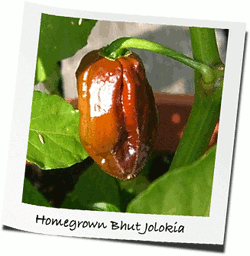 Jolokia, homegrown